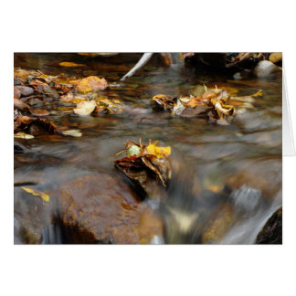 Fall Stream; No Text Card