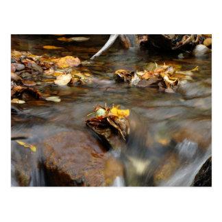 Fall Stream; No Text Postcard