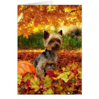 Fall Thanksgiving - Tucker - Yorkie Card