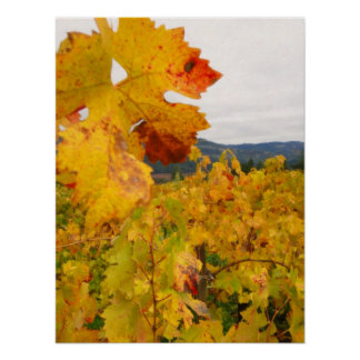 Fall Time in Napa Valley - Vineyard Poster