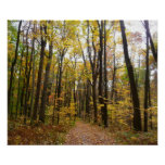 Fall Trail and Golden Leaves at Laurel Hill Park Poster