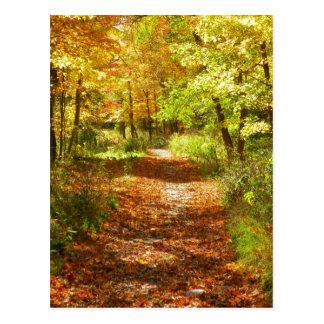 Fall Trail Postcard