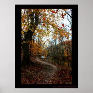 Fall Tree Along Winding Path Poster