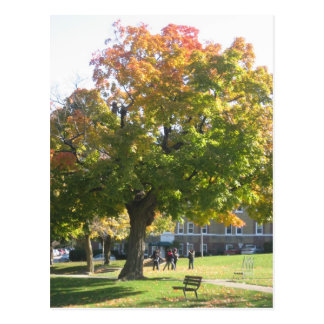 Fall Tree Changing Colors Postcard