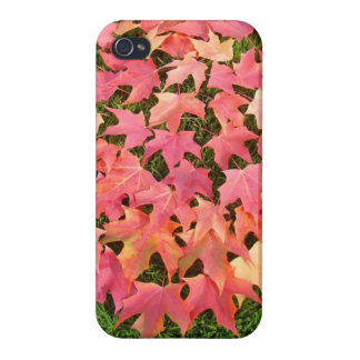 Fall Tree Leaves iPHONE 4 cases Autumn Holiday