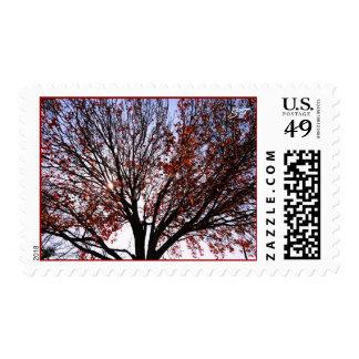 Fall Tree Postage
