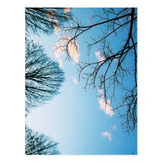 Fall Tree Skyline Postcard