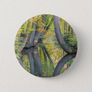 Fall tree trunks with reflection in forest water pinback button