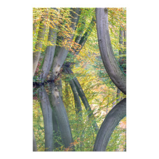 Fall tree trunks with reflection in forest water stationery
