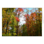 Fall Trees and Blue Sky Autumn Nature Photography Card