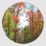 Fall Trees and Blue Sky Autumn Nature Photography Classic Round Sticker