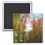 Fall Trees and Blue Sky Autumn Nature Photography Magnet