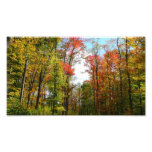 Fall Trees and Blue Sky Autumn Nature Photography Photo Print