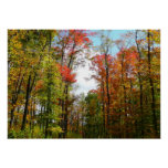 Fall Trees and Blue Sky Autumn Nature Photography Poster