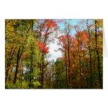Fall Trees and Blue Sky Card