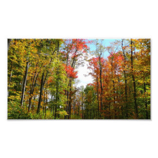 Fall Trees and Blue Sky Photo Print