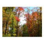 Fall Trees and Blue Sky Postcard