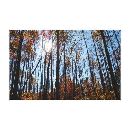 Fall Trees Canvas Prints