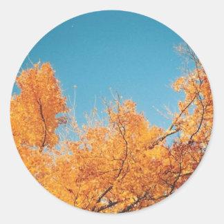 fall trees classic round sticker