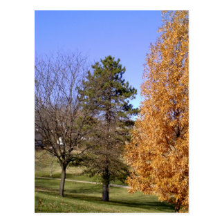 Fall Trees Postcard