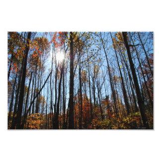 Fall Trees print Photo Art