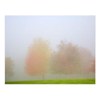 Fall trees shrouded in mist postcard