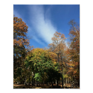 Fall Trees with Clouds Poster