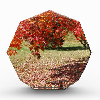 Fall Under The Maple Tree Award