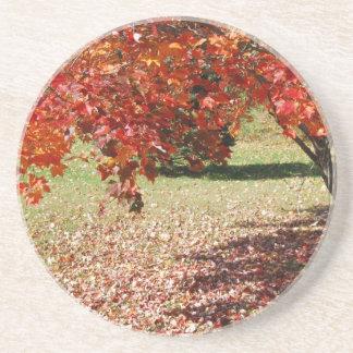 Fall Under The Maple Tree Coaster