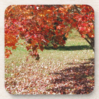 Fall Under The Maple Tree Drink Coaster