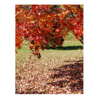 Fall Under The Maple Tree Postcards