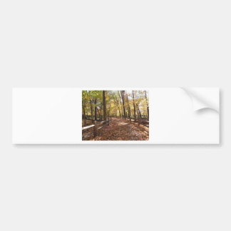 Fall walk in the park and changing colors bumper sticker