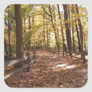 Fall walk in the park and changing colors square sticker