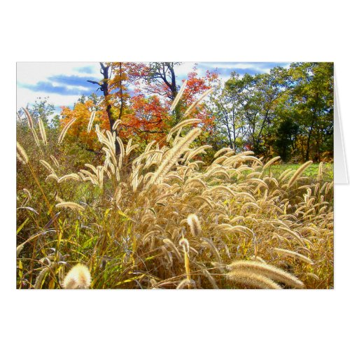 Fall Weeds at Illinois Central College Parking Lot