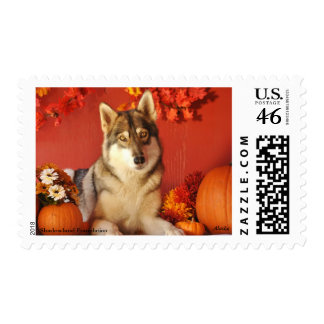 Fall Wolf Postage Stamp