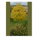 Fall Yellow Leaves/Tree Postcard