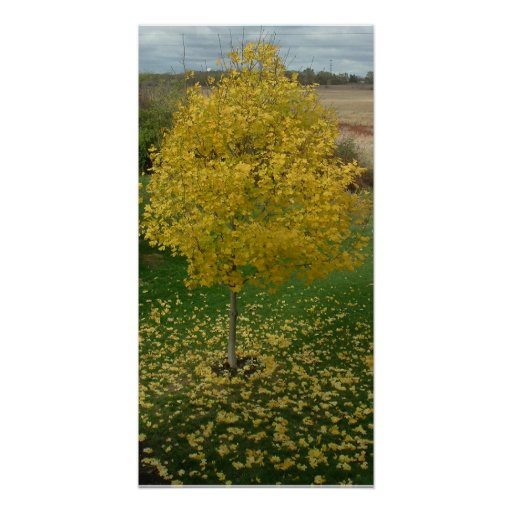Fall Yellow Leaves/Tree Poster