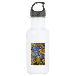Fall yellow maple trees canopy stainless steel water bottle