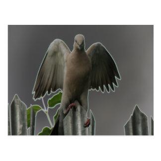 Fallen Angel Dove Postcard