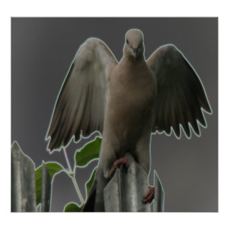 Fallen Angel Dove Print