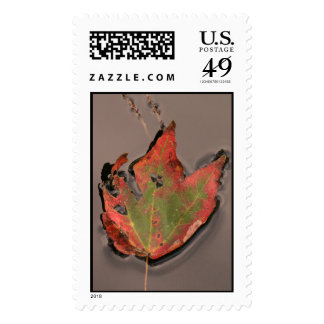Fallen Autumn Leaf, Swamp Waters Stamps