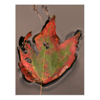 Fallen Autumn Leaf, Swamp Waters Postcard