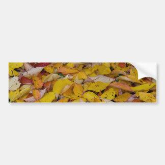 Fallen autumn leaves car bumper sticker