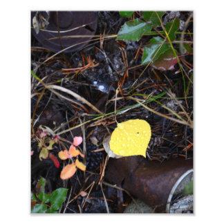 Fallen Birch Leaf Photo