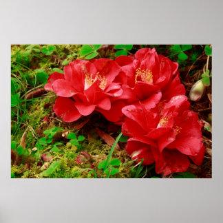 Fallen camellias poster