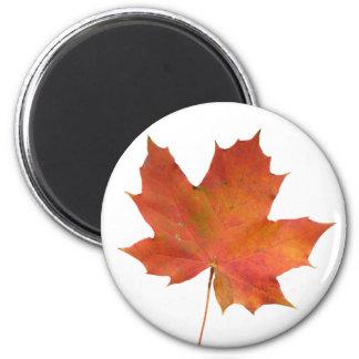 Fallen Leaf 01 2 Inch Round Magnet