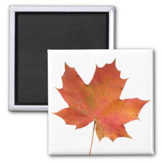 Fallen Leaf 01 2 Inch Square Magnet
