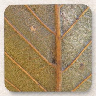 Fallen Leaf 10 Coaster