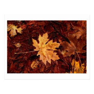 Fallen Leaf Postcard