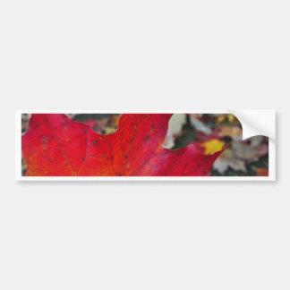 Fallen Leaves Bumper Sticker